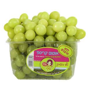 ענבים ירוק ענבי טלי ״ווינטר קינג״